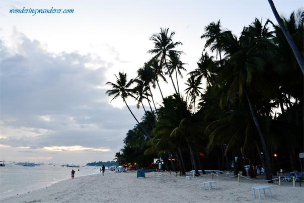 Coconut Trees beside Alona Beach in Bohol