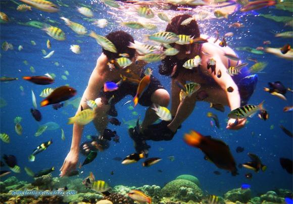 Balicasag Island Fishes with Jun and Jul