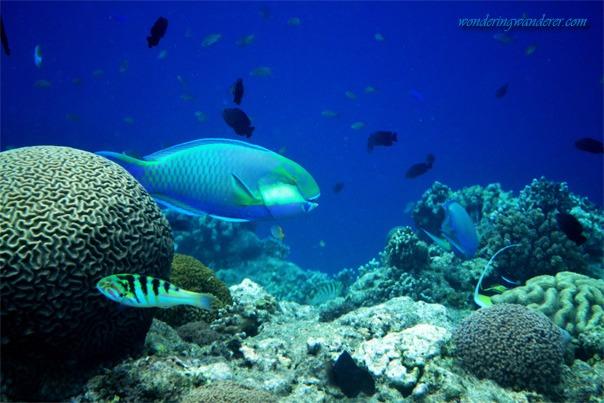Balicasag Island's Diver's Heaven