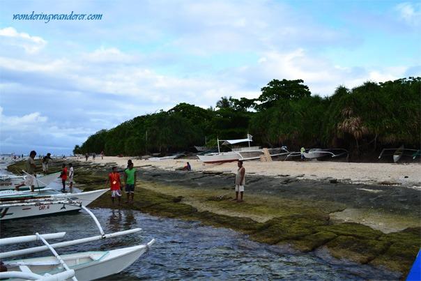 Balicasag Island's Shore