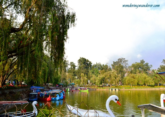 Burnham Park's Swan boats with some colorful boats