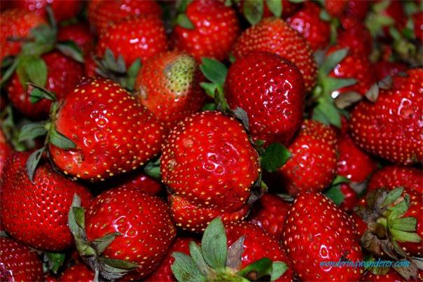 La Trinidad Strawberry Farm's Sweet Strawberries