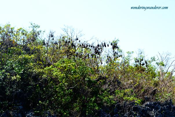 Children's Island's Bats
