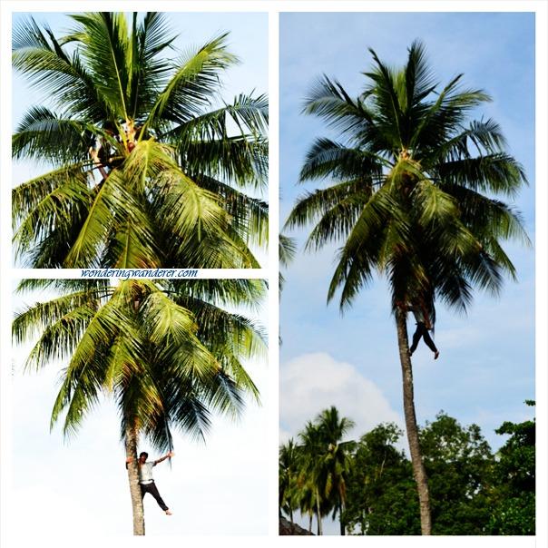 Pearl Farm Davao City - Coconut Man