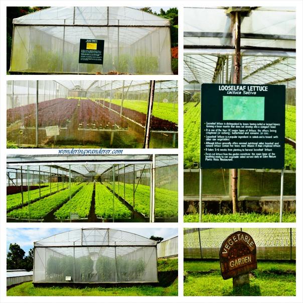 Eden Nature Park Vegetable Garden - Davao City