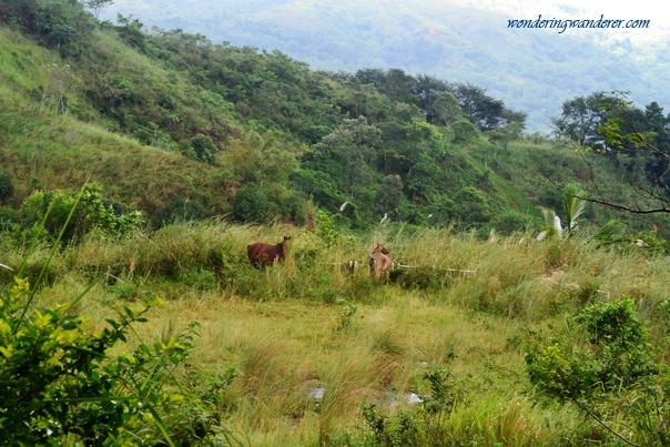 Sierra Madre Hotel and Resort - Tanay, Rizal Horses