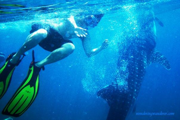 Whale Shark Watching - Oslob, Cebu