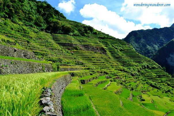 Center of Batad Rice Terraces