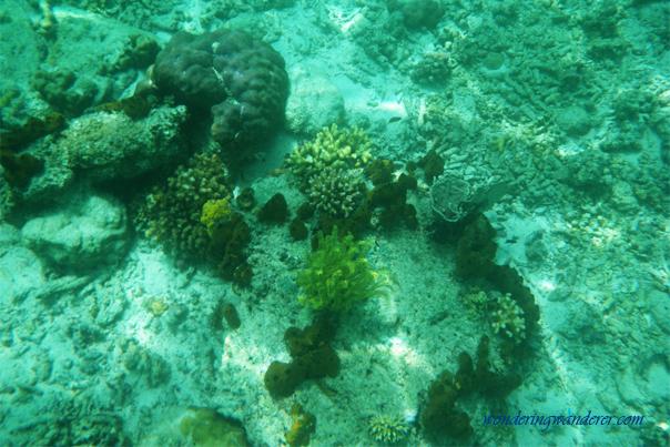 Colorful corals in El Nido, Palawan