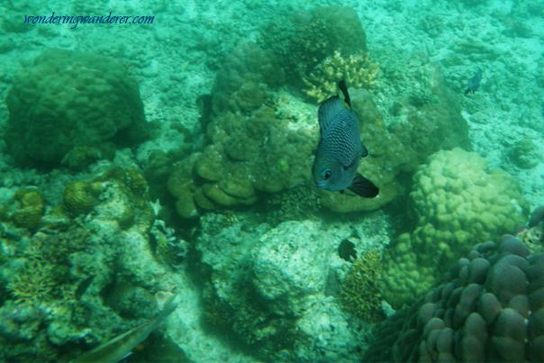 Snorkeling in El Nido, Palawan Philippines