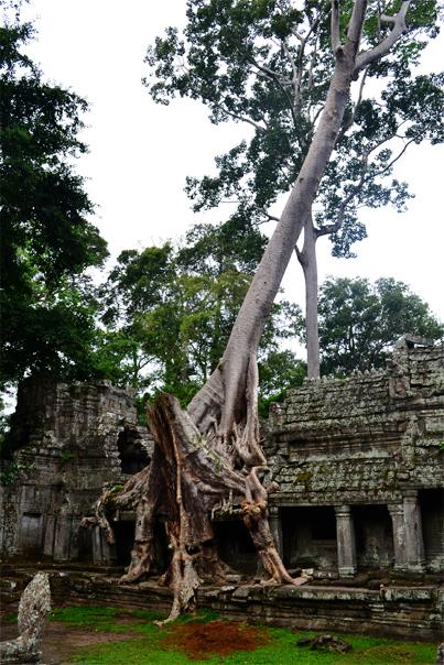 Temple outgrown by trees - Preah Khan - Siem Reap, Cambodia