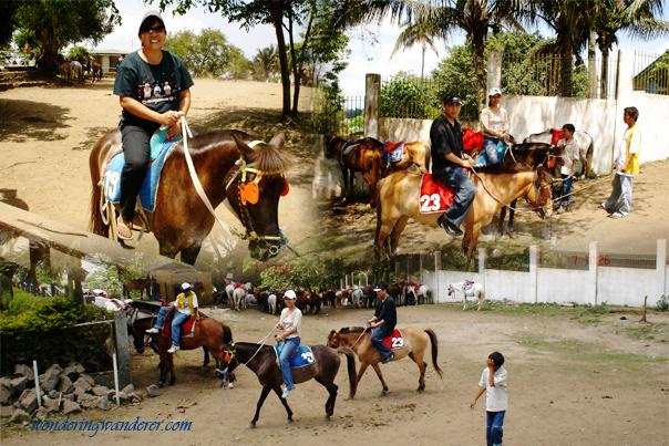 Picnic Grove Horses - Tagaytay City, Cavite