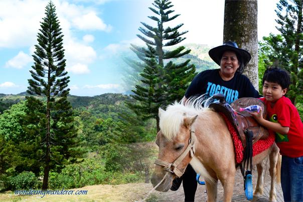 Small Horse at Picnic Grove - Tagaytay City, Cavite