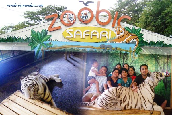 White Tiger at Zoobic Safari - Subic Bay Freeport Zone