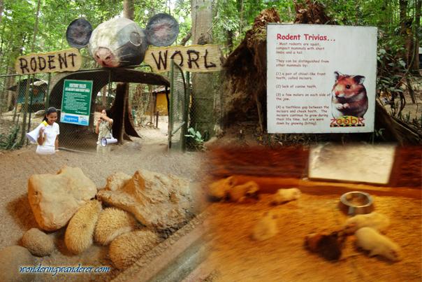 Rodent World - Zoobic Safari - Subic Bay Freeport Zone