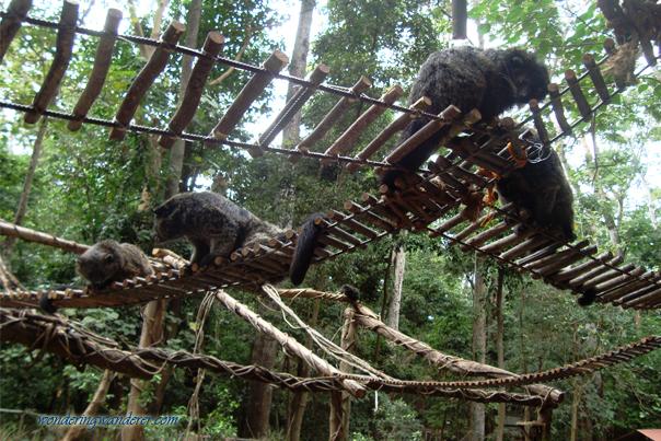 Bearcats of Zoobic Safari - Subic Bay Freeport Zone