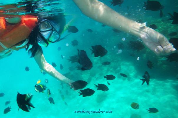Crushing crackers while snorkeling in Puerto Galera