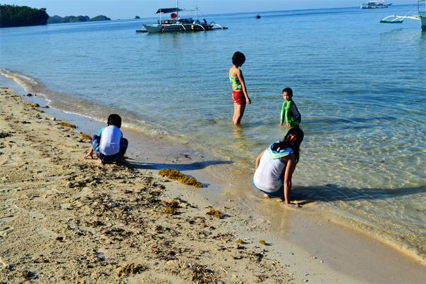 Seaweeds of Punta Ballo Beach