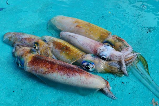 "Squids for sale in Naked Island ""Pansukian Sandbar"""