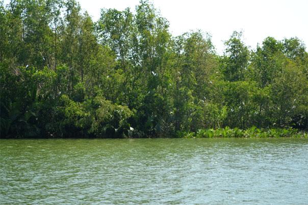 Balsa River Cruise: Native Floating Restaurant Herons